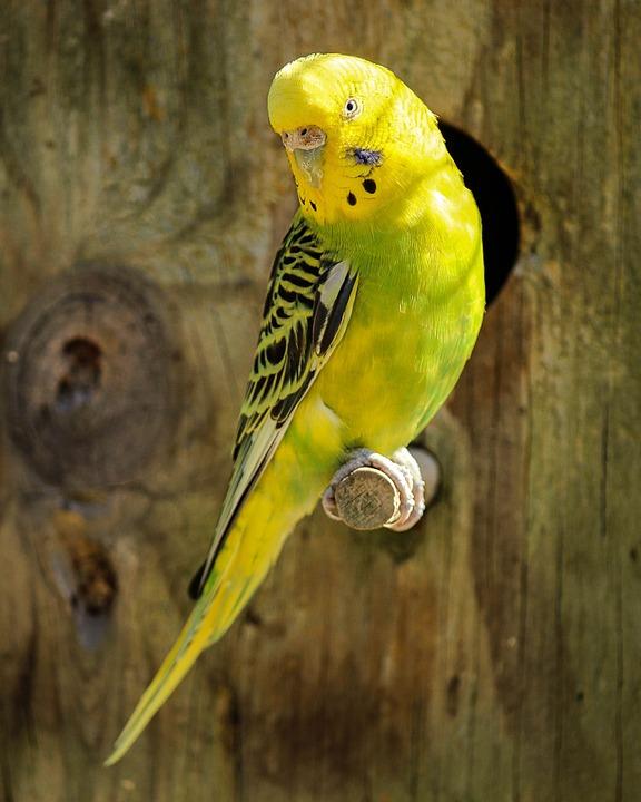 Dierenwinkel Vogel